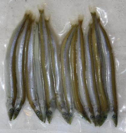 Frozen Sand Eels 1